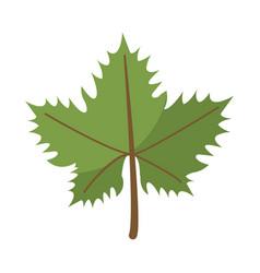 Leave grape wine symbol vector