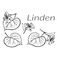 Linden Leaves Pictogram Set vector image vector image
