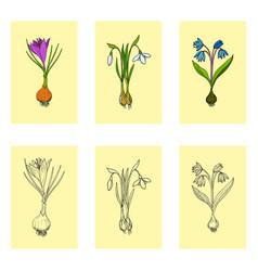 Spring flowers set vector