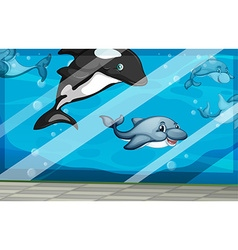 Dolphins swimming in the aquarium tank vector