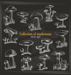 Collection of mushrooms in sketch style on a dark vector image vector image