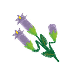 Drawing crocus flower ornament vector