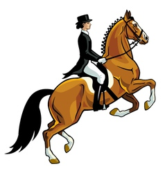 dressage rider vector image vector image