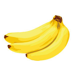 yellow banana fruit vector image vector image