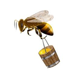 bee and honey in bucket vector image
