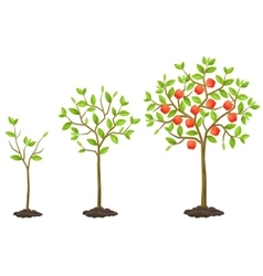 Growth cycle from seedling to fruit tree vector