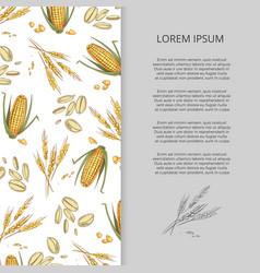 hand drawn cereals corn wheat banner design vector image