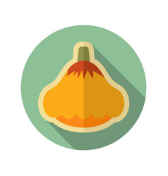 Pattypan squash flat icon vegetable vector
