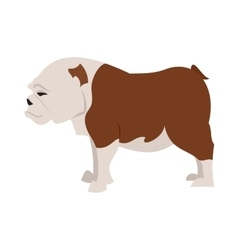 English bulldog breed vector
