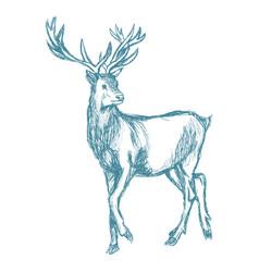 Hand drawn deer big antlers wildlife poster blue vector
