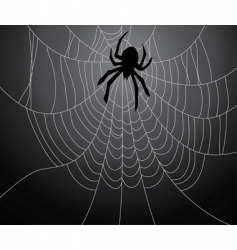 black spider and the web vector image