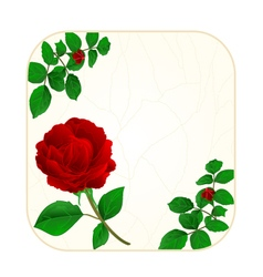 Button square cracks in the porcelain and rose vector