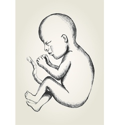 Sketch of human fetus vector image