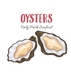 Oysters in cartoon style vector image