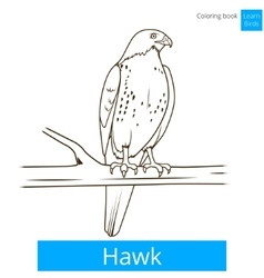 Hawk bird learn birds coloring book vector