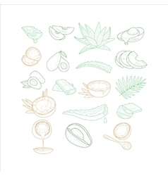 Avocado aloe and coconut from different angles vector