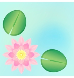 Pink waterlily background vector