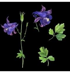 Set of watercolor drawing delphinium vector