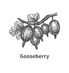 Sketch gooseberry with leaves and branches vector