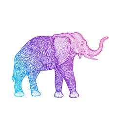Elephant in profile line art boho design vector image
