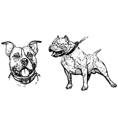 American pitbull terrier vector