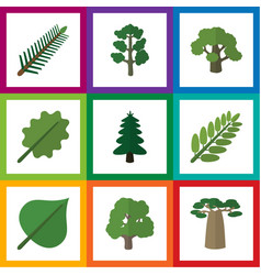 Flat icon natural set of spruce leaves decoration vector