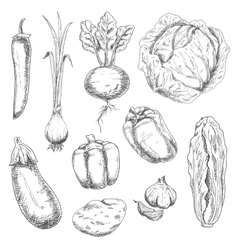 Farm vegetables sketches for recipe book vector
