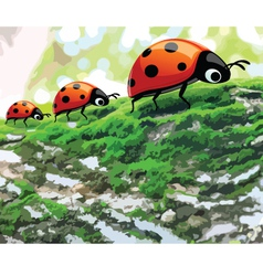 lady bug2 vector image vector image