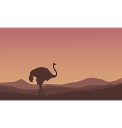 Silhouette of scenery ostrich in the hills vector