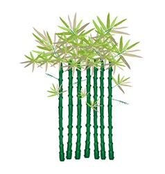 A beautiful isometric of green bamboo plants vector