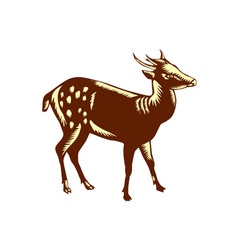 Philippine Spotted Deer Woodcut vector image