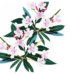 Pink flowers branch isolated vector