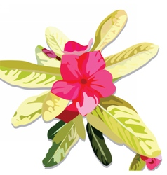 Pink fuchsia summer flower isolated vector