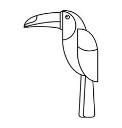 Brazilian toucan bird nature outline vector