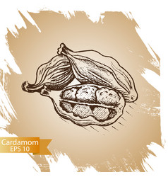 Cardamom culinary seasoning vector