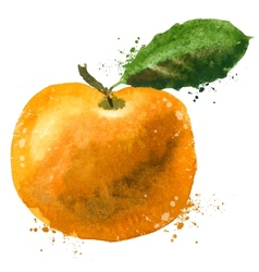 Mandarin logo design template fruit or vector