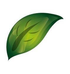 Leaves nature icon vector