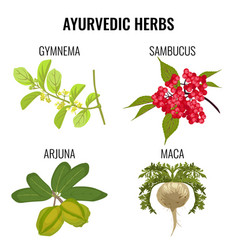 Ayurvedic herbs set isolated on white gymnema vector