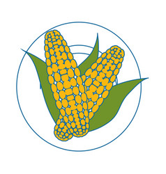 Corn vegetable icon vector