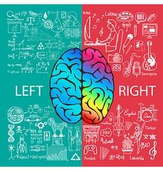 Human brain infographic vector image