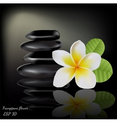 Flower frangipani on dark background vector