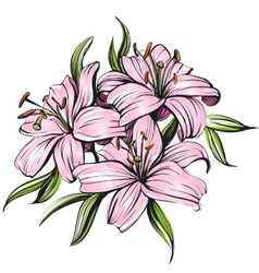 Floral blooming lilies hand vector