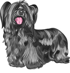 Funny shaggy smiling dog Skye Terrier breed vector image vector image