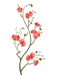cherry blossom branch abstract background vector image vector image