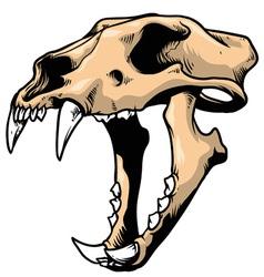 tiger skull vector image vector image