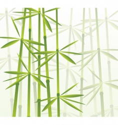 tropical bamboo forest vector image vector image
