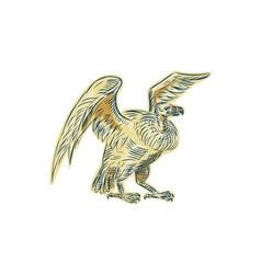 Vulture Buzzard Etching vector image vector image