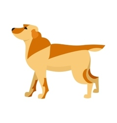 Labrador retriever dog breed vector image