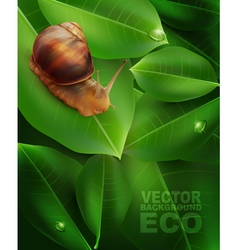 Snail crawling on the green leaf vector