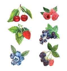 Watercolor Berry Set vector image